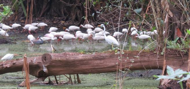 30 lotsa birds